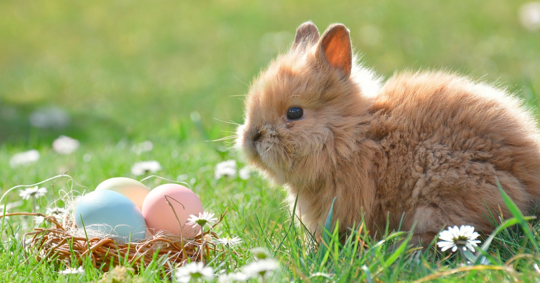 velikonoce zajíček